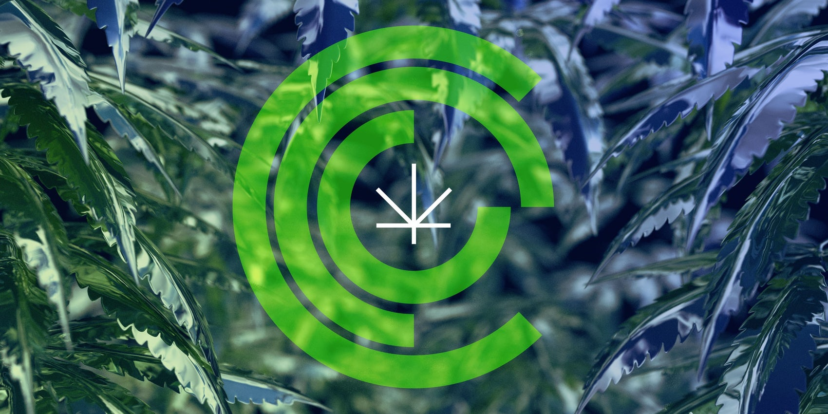 CCC Cannabis logo Chicago Graphic Design Span 2